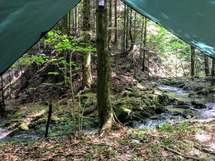 zanocuj w lesie bushcraft